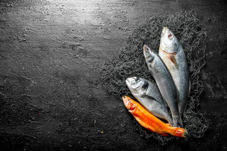 Fresh fish on the fishing net. On black rustic background