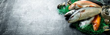 Fresh fish on a fishing net with oysters. On dark rustic background