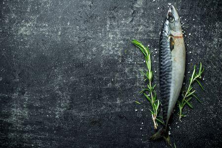 Raw fish mackerel with rosemary. On dark rustic background