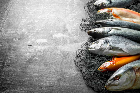 Assortment of fresh fish on the fishing net. On dark rustic background Banque d'images