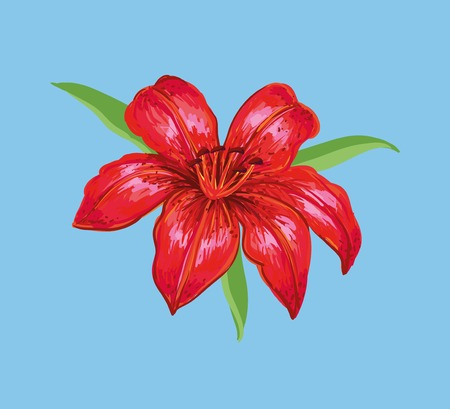 an inflorescence: Red lily isolated on a blue background Illustration