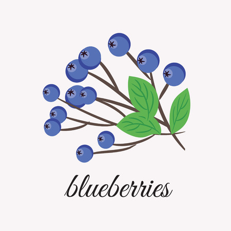 sedative: On a white background depicts a sprig of blueberries. Design element