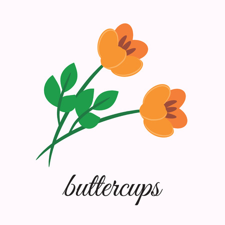 depicts: On a white background depicts buttercups. Design element