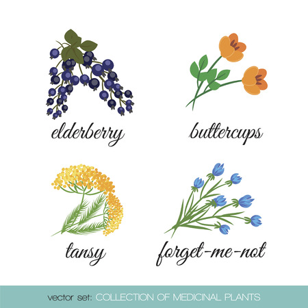 sedative: On a white background set of isolated medicinal plants: elderberries, buttercup, tansy, forget-me-not Illustration