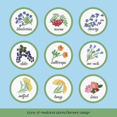 Sobre un fondo azul conjunto de aislados de plantas medicinales arándanos, Rowan, de la achicoria, anciano, Ranunculaceae flores, no me olvides, tanaceto, milenrama, brezo. ilustración