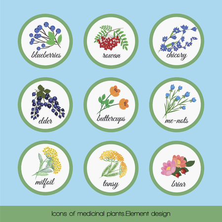 On a blue background set of isolated medicinal plants blueberries, rowan, chicory, elder, buttercup flowers, forget me not, tansy, milfoil, briar. illustration