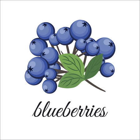On a white background depicts a sprig of blueberries. Design element. illustration