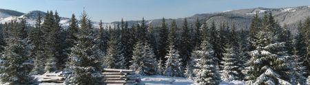 Forest near Dukonya monastery in ukranian Carpathian