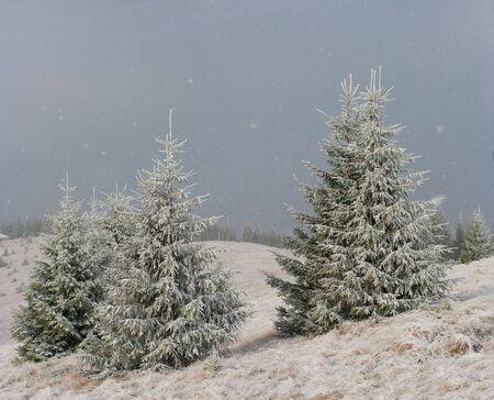 First snow on the Dukonia district of ukrainian Carpathian mountain