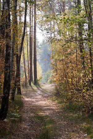 Trail in autumn forest Stock Photo