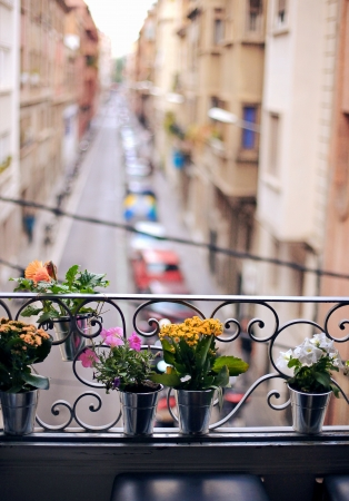 potted plants on an open window sill photo