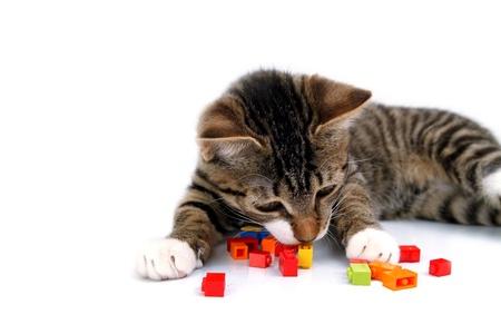 장난 작은 새끼 고양이 흰색 배경에 고립 된 블록을 재생합니다 스톡 콘텐츠