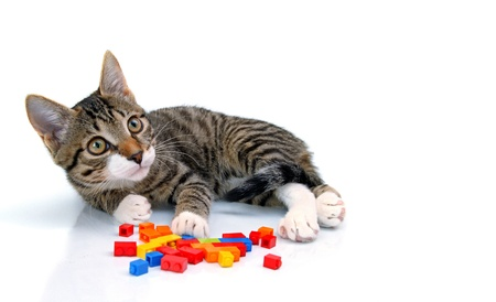 playful little kitten is playing with blocks isolated on white background photo