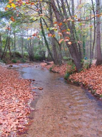 autum: Autum river landscape in the forest