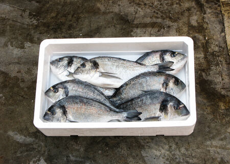 gilthead bream: Fresh Mediterranean gilthead bream, polystyrene box