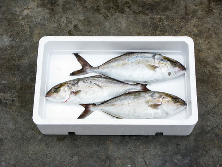 Fresh Mediterranean Greater amberjack, polystyrene box photo