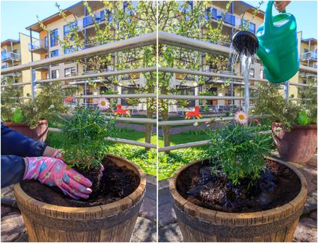 turba: Woman working in the garden.