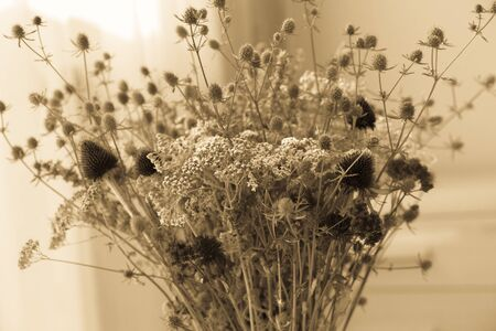 yarrow: Bouquet of dried wildflowers with filter effect retro vintage style. Stock Photo