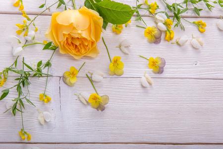 Yellow rose on white wooden background. David Austin Rose Golden Celebration