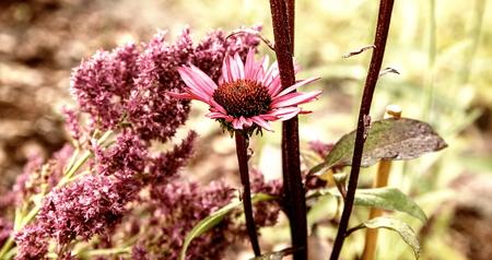 orange flowers in garden flowerbed. Vintage nature outdoor autumn photo Stock Photo