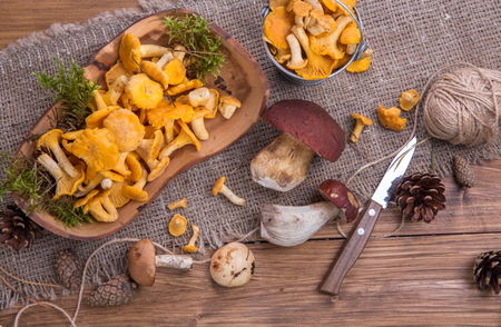 Wild fresh mushrooms on a rustic wooden table. Chanterelles, boletus, russula. Copyspace Stock Photo