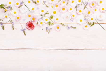 Composition, frame daisies on white wooden boards. Small flowers on handmade wooden table background. Backdrop with copy space, flat lay, top view. Mother's, Valentines, Women's, Wedding Day concept.