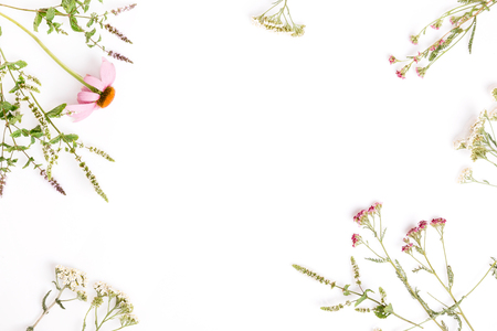 Echinacea, Yarrow, medicinal herbs background, flat lay, top view