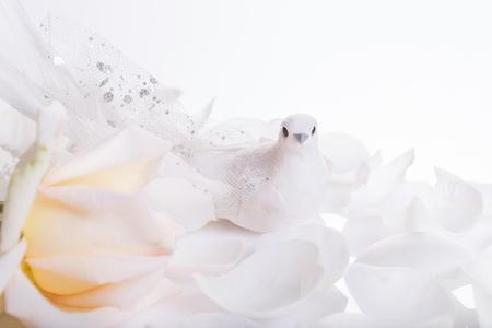 Fondo de boda romántica. Paloma blanca y rosa blanca, símbolo de paz y amor. Boda, San Valentín, compromiso, tema de aniversario.
