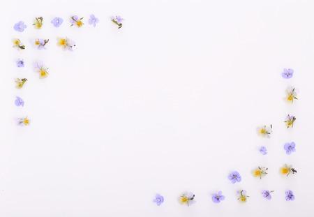 Motif floral sur fond blanc, petites fleurs jaunes blanches Banque d'images
