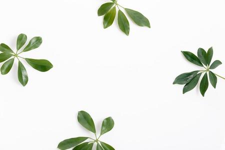 Tropisch groen bladkader op witte achtergrond Stockfoto