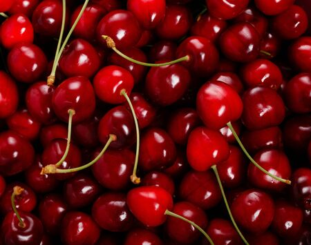 Fresh red ripe cherries with cuttings and leaves, abundant background Large collection of fresh red cherries