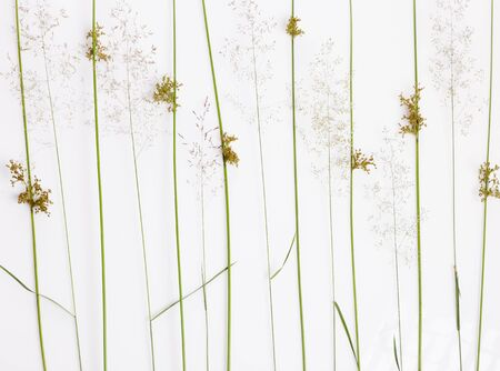 Styled Green leaves pattern. Varied forest grass and leaves on a white background.
