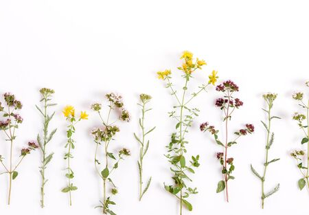 Various herbs and flowers on white background, top view, floral border Stock Photo