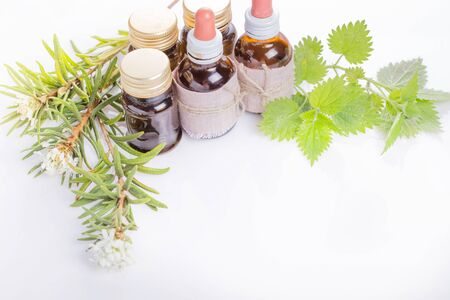 Medicinal herbs wild rosemary, tincture bottles or oil