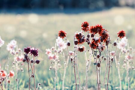 Beautiful meadow field with wild flowers. Spring or summer wildflowers closeup. Health care concept. Rural field.
