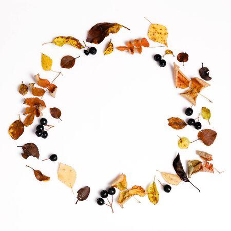 Composición de otoño Marco hecho de otoño hojas secas multicolores y bayas de chokeberry sobre fondo blanco. Foto de archivo