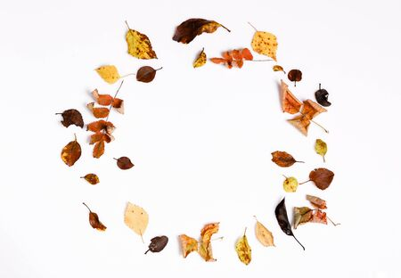 Autumn composition.Frame made of autumn dry multi-colored leaves and berries of chokeberry on white background. Stok Fotoğraf