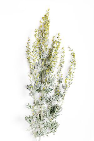 Medicinal herbs, Sagebrush, Artemisia, mugwort on a white background. Homeopathy medicine concepte Foto de archivo - 135731425