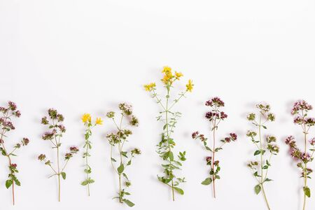 Various herbs and flowers yarrow, marjoram, tutsan, oregano, marjoram on white background, top view, flat lay, floral border Foto de archivo - 135732811