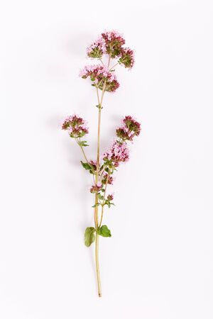 fresh marjoram herb purple flower isolated on the white background, top view Foto de archivo - 135732819