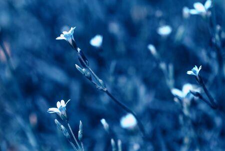 Beautiful meadow field with wild flowers. Spring or summer wildflowers closeup. Health care concept. Rural field. Alternative medicine. Environment Foto de archivo - 136175713