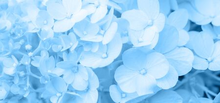 White hydrangea flowers panoramic border, banner, wedding romantic background. Flat lay. Foto de archivo - 136175834