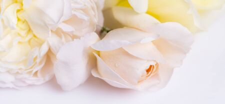 Romantic banner, delicate white roses flowers close-up. Fragrant crem yellow petals, abstract romance background, pastel and soft flower card Foto de archivo - 136001148
