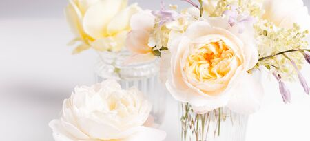 Romantic banner, delicate white roses flowers close-up. Fragrant crem pink petals 免版税图像