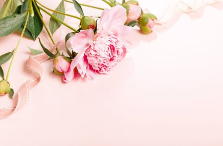 Delicate white pink peony with petals flowers and white ribbon on wooden board. Overhead top view, flat lay. Copy space.