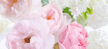 Romantic banner, delicate white roses flowers close-up. Fragrant crem pink petals Stock fotó
