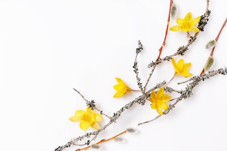 Frame made of branches and yellow spring flowers on white background. Beauty, spring, Easter concept.