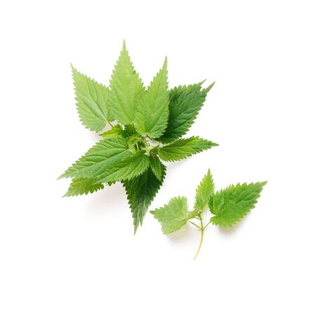Stinging nettle, Urtica dioica, close up, isolated on white Stock fotó