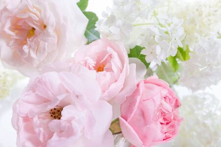 Romantic banner, delicate white roses flowers close-up. Fragrant crem pink petals, abstract romance background, pastel and soft flower card