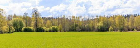 Bright spring beautiful landscape, green field, sunny weather, Green field and blue sky.